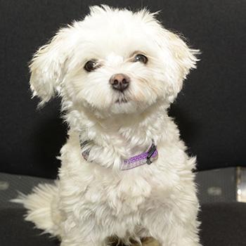 Maffy - Firmenhund